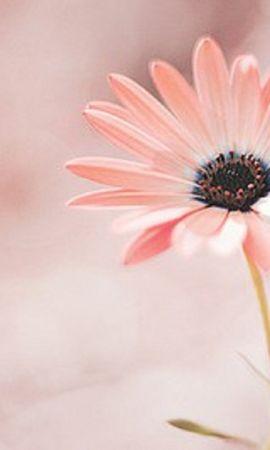 18556 скачать обои Растения, Цветы - заставки и картинки бесплатно