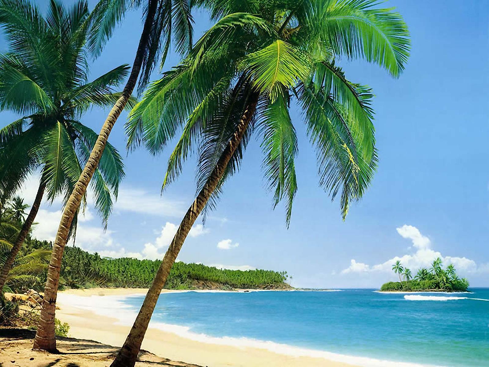 10866 скачать обои Море, Пейзаж, Пляж, Пальмы, Лето - заставки и картинки бесплатно