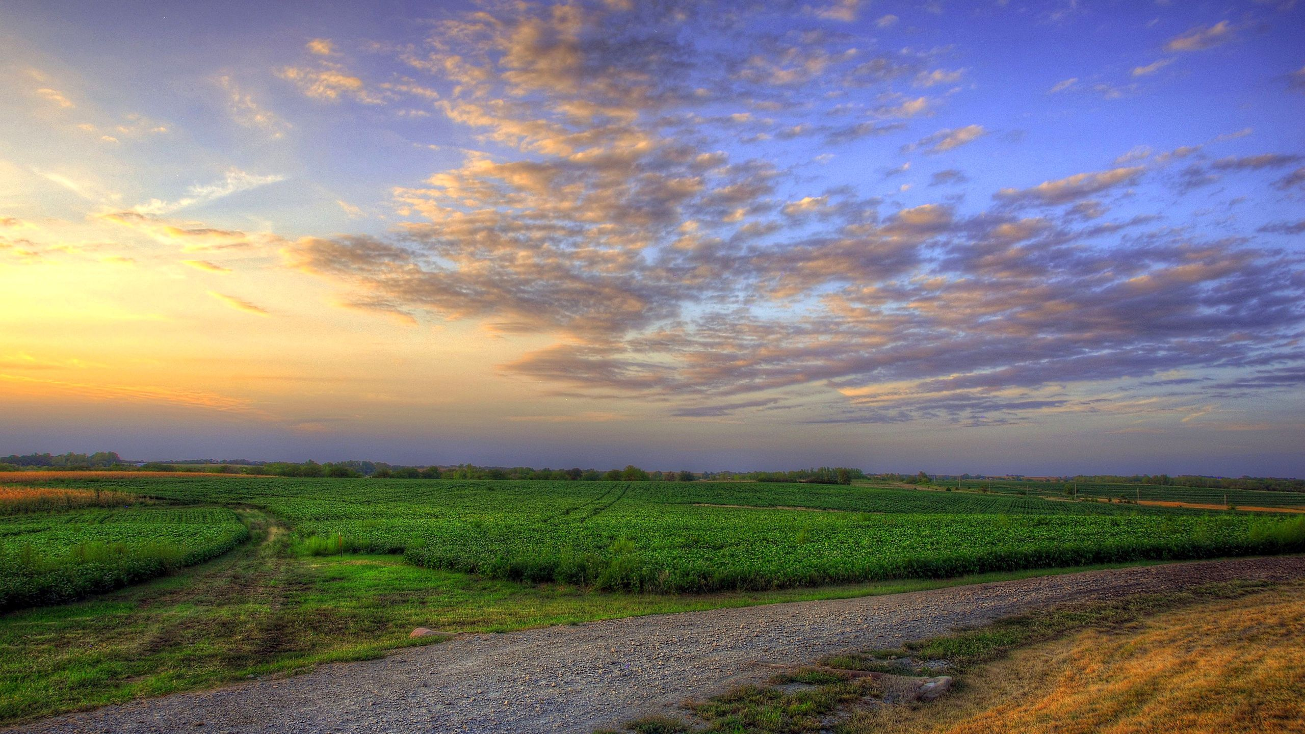 100671 Screensavers and Wallpapers Summer for phone. Download Nature, Grass, Sky, Summer, Field pictures for free