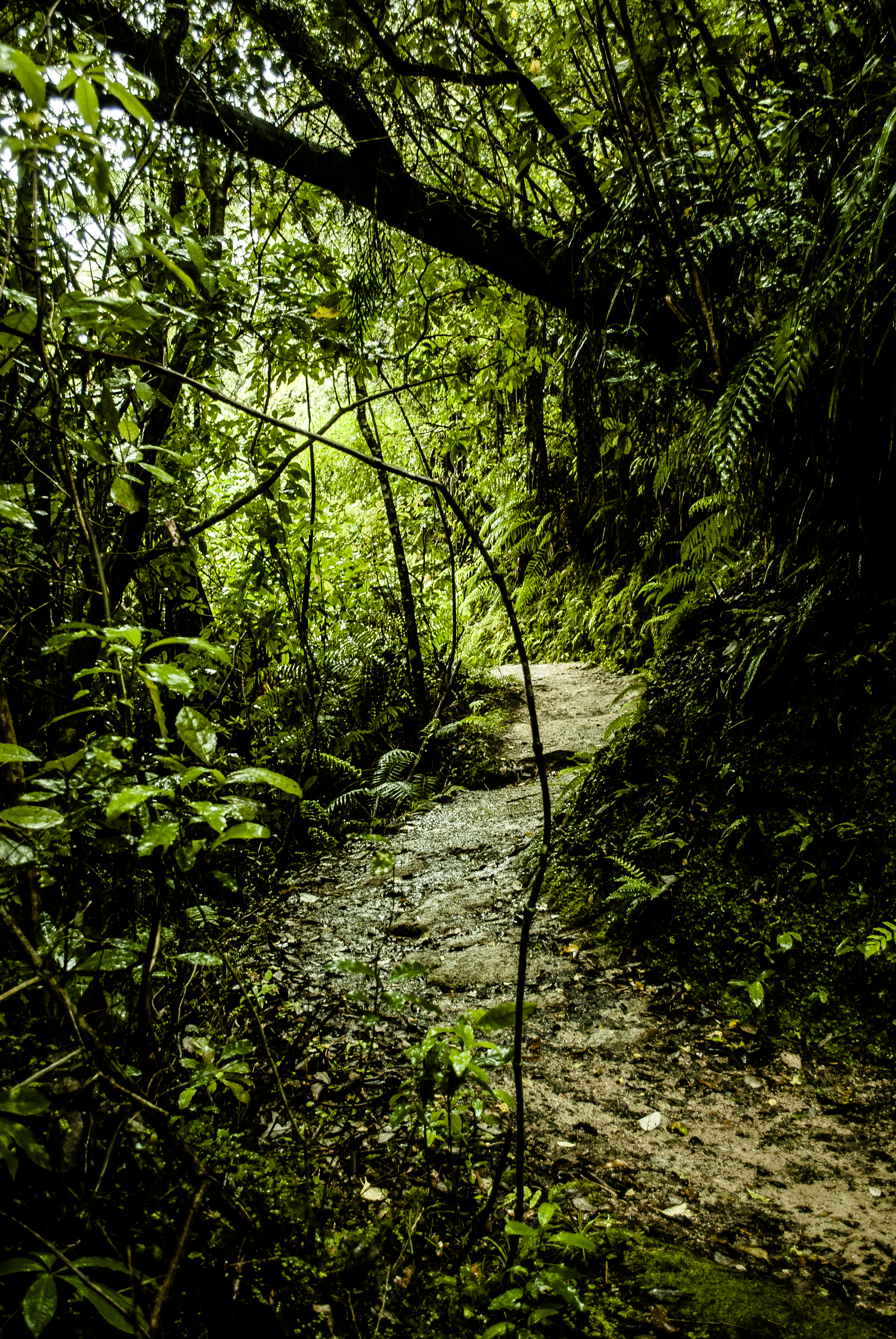 101195 download wallpaper Nature, Grass, Path, Jungle screensavers and pictures for free