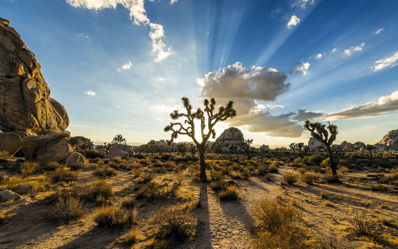 126077 скачать обои Природа, Парк Джошуа-Три, Сша, Растения, Небо - заставки и картинки бесплатно