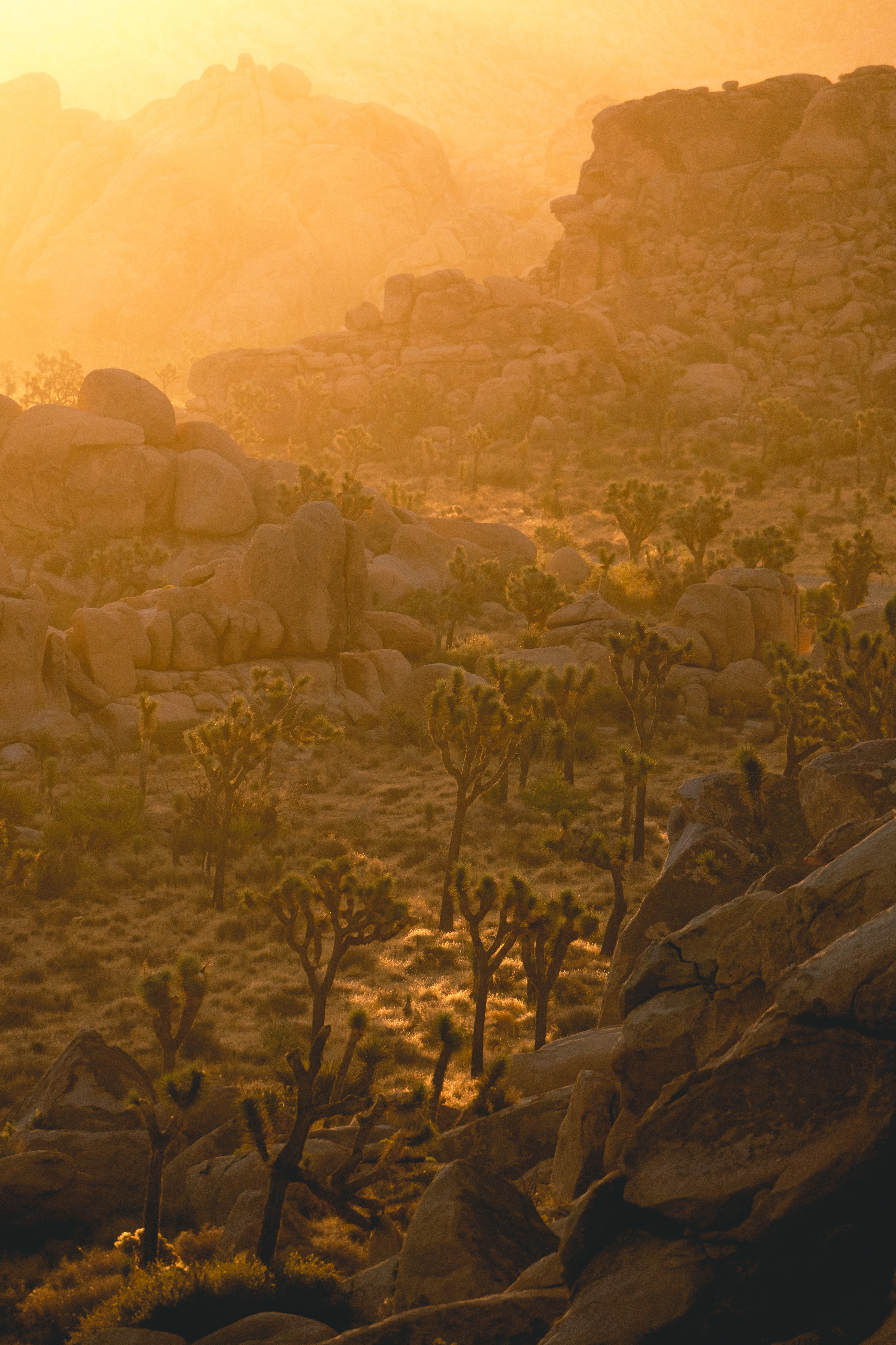 128909 download wallpaper Nature, Trees, Stones, Rocks, Beams, Rays, Sun screensavers and pictures for free