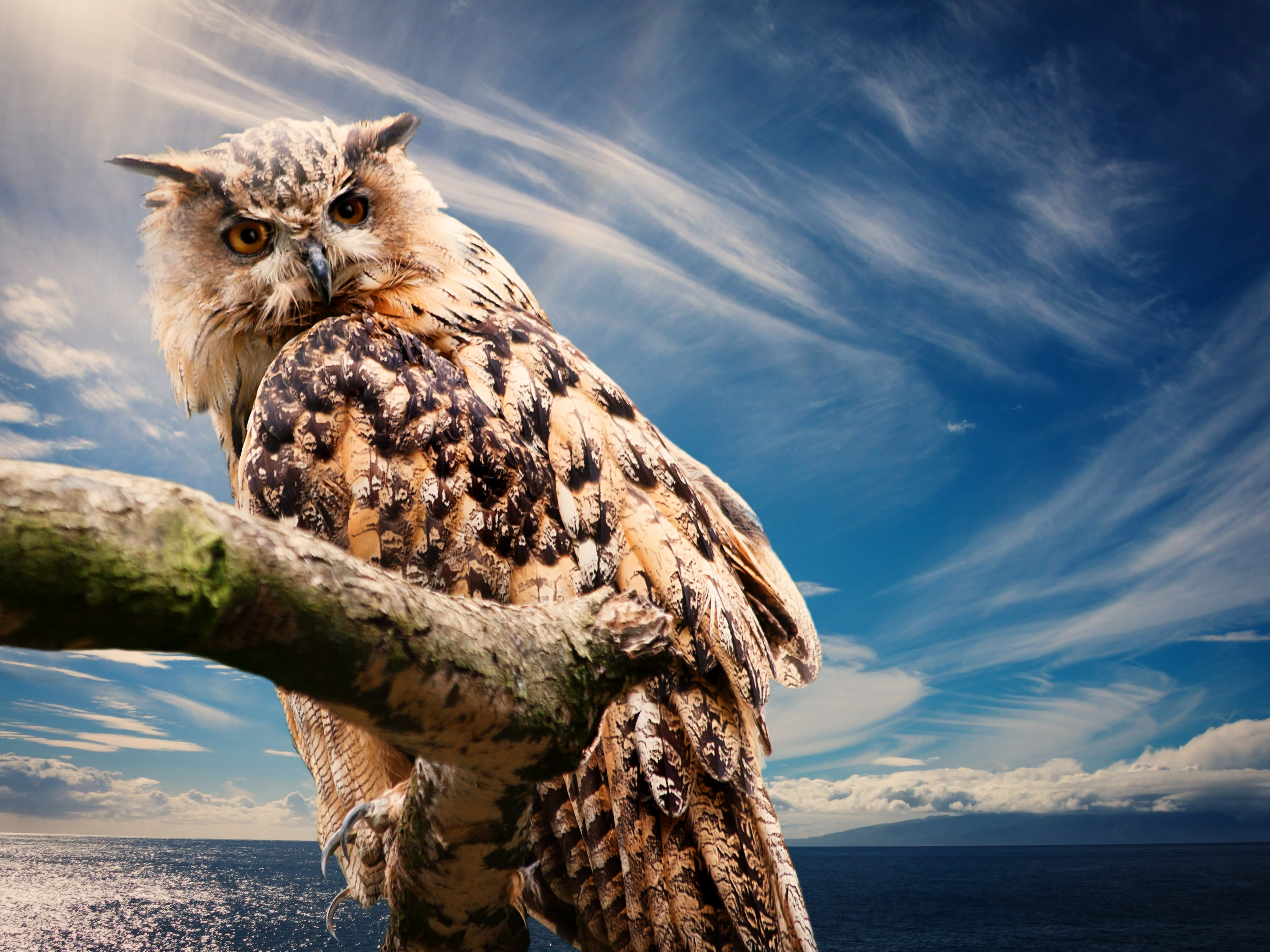110252 Screensavers and Wallpapers Bird for phone. Download Animals, Sky, Owl, Bird, Predator pictures for free