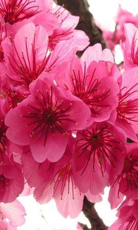 8605 скачать обои Растения, Цветы - заставки и картинки бесплатно