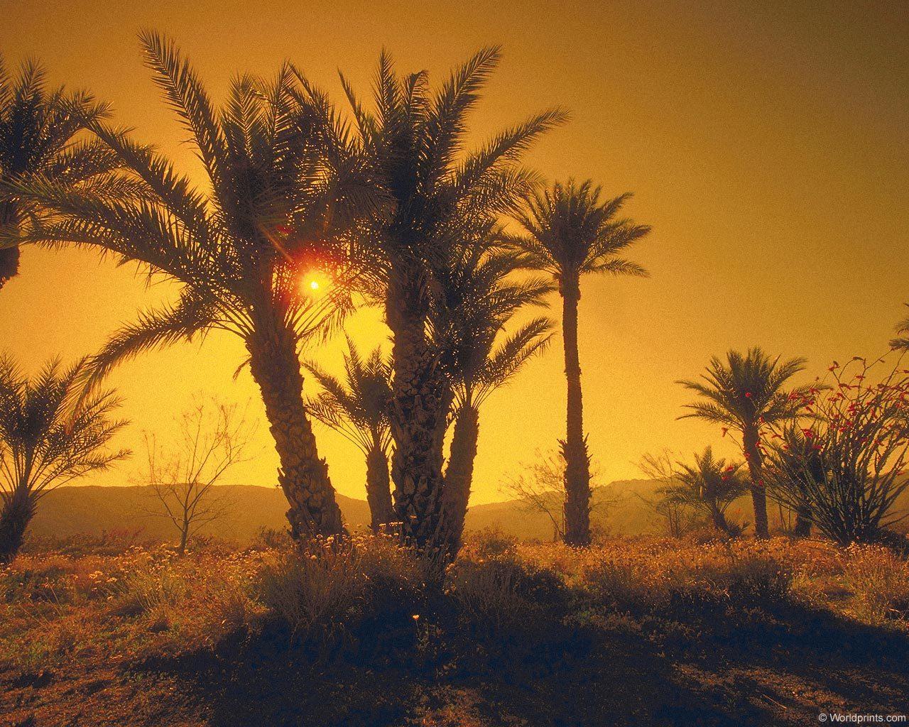 11473 скачать обои Пейзаж, Деревья, Закат, Солнце, Пальмы - заставки и картинки бесплатно