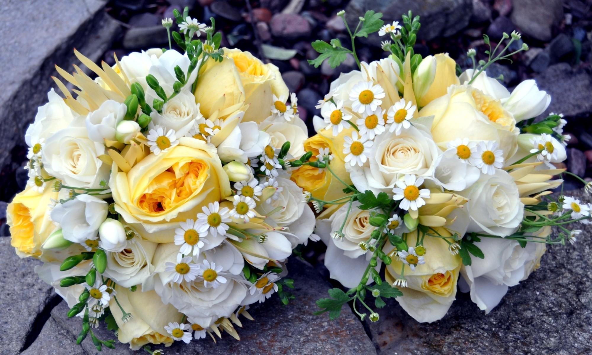 127101 télécharger le fond d'écran Fleurs, Camomille, Coupler, Paire, Légumes Verts, Verdure, Joliment, C'est Beau, Roses, Bouquets - économiseurs d'écran et images gratuitement