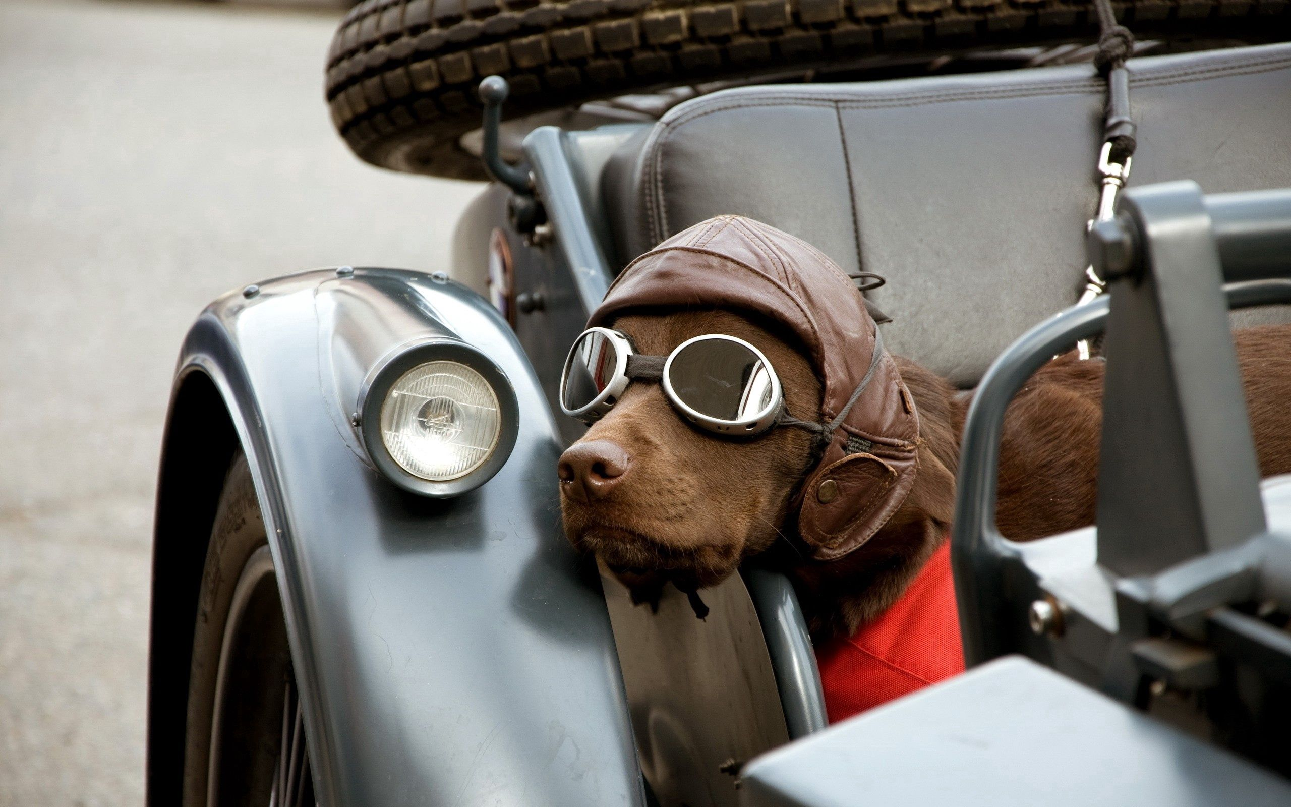 148696 download wallpaper Animals, Dog, Car, Glasses, Spectacles, Cap screensavers and pictures for free
