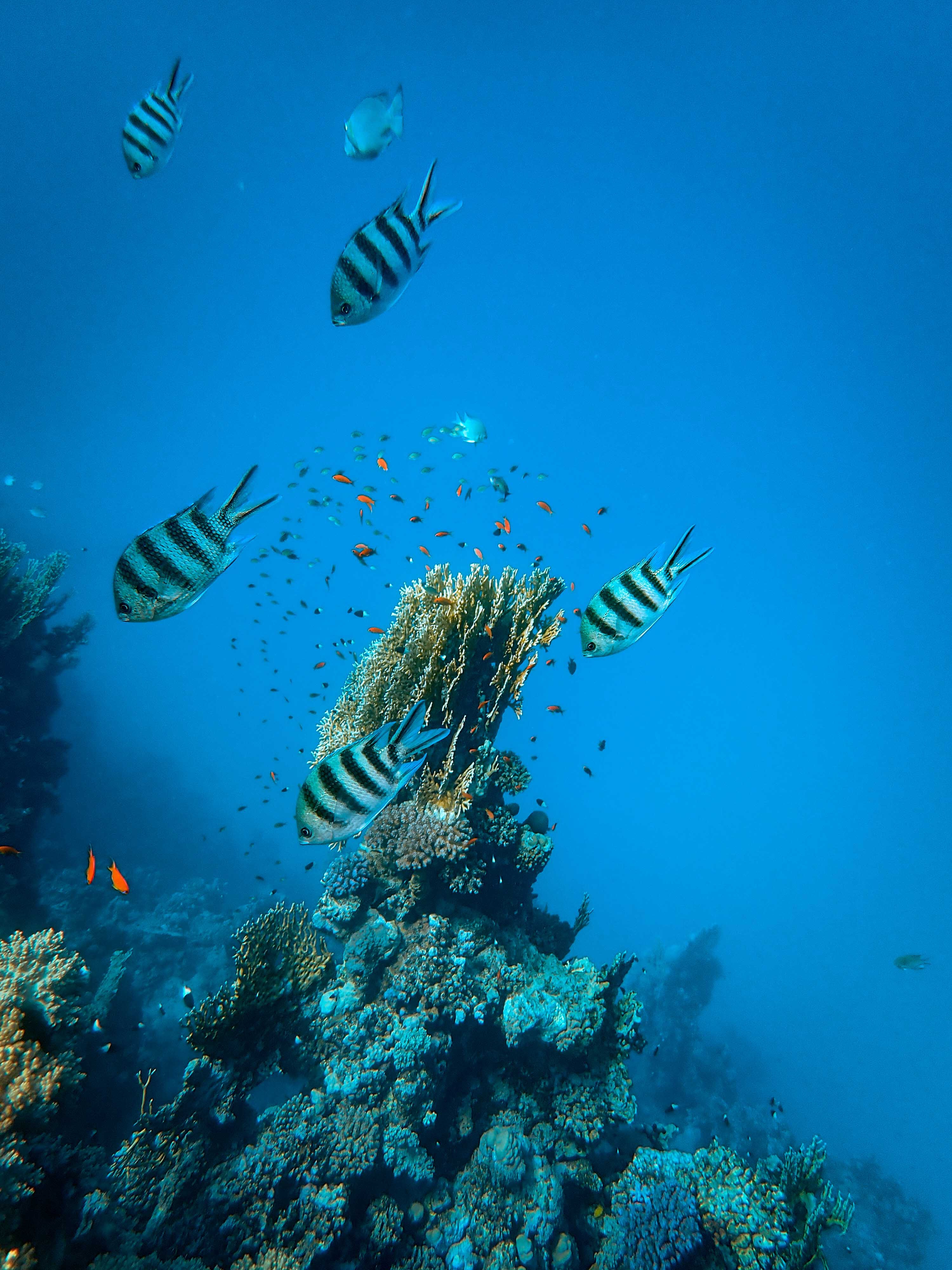 68802 Заставки и Обои Рыбы на телефон. Скачать Рыбы, Животные, Кораллы, Аквариум, Водоросли картинки бесплатно
