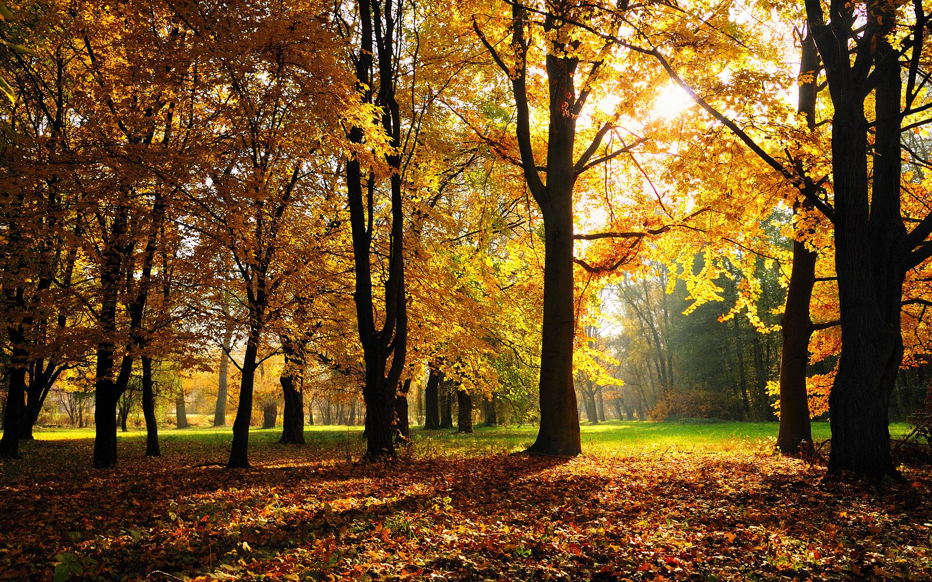16747 скачать обои Пейзаж, Деревья, Осень - заставки и картинки бесплатно