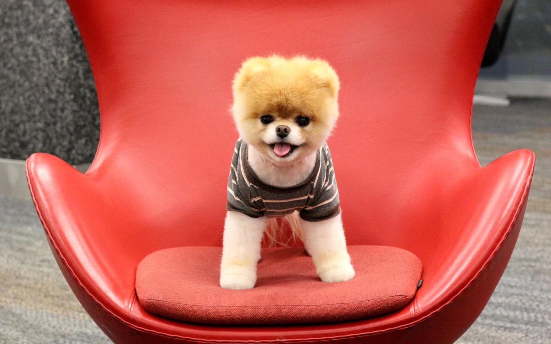 131546 Screensavers and Wallpapers Sit for phone. Download Animals, Sit, Dog, Muzzle, Puppy pictures for free