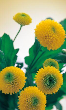 4591 скачать обои Растения, Цветы - заставки и картинки бесплатно