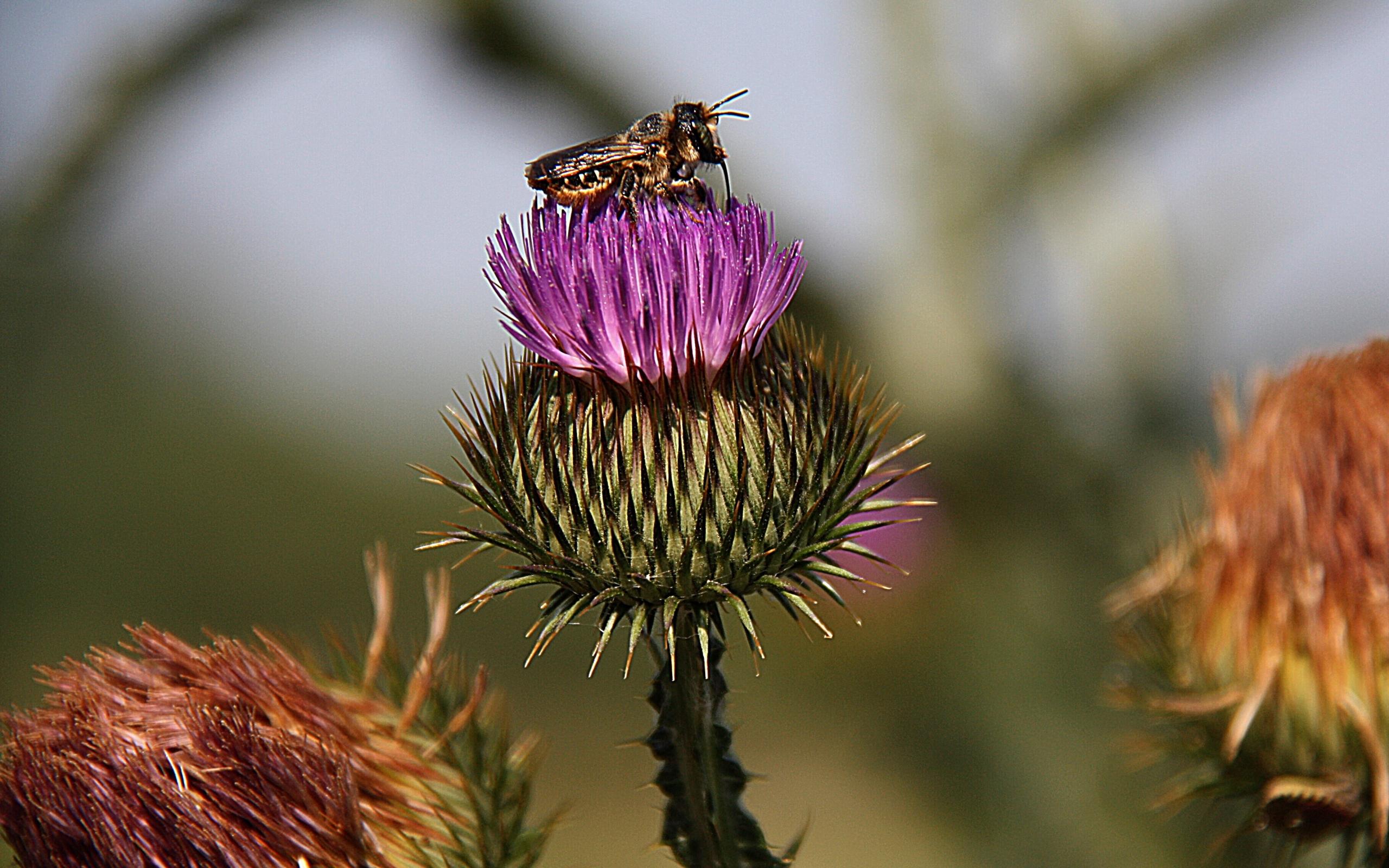 28392 Hintergrundbild herunterladen Blumen, Insekten, Bienen - Bildschirmschoner und Bilder kostenlos