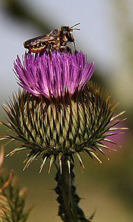 28392 Salvapantallas y fondos de pantalla Insectos en tu teléfono. Descarga imágenes de Flores, Insectos, Abejas gratis