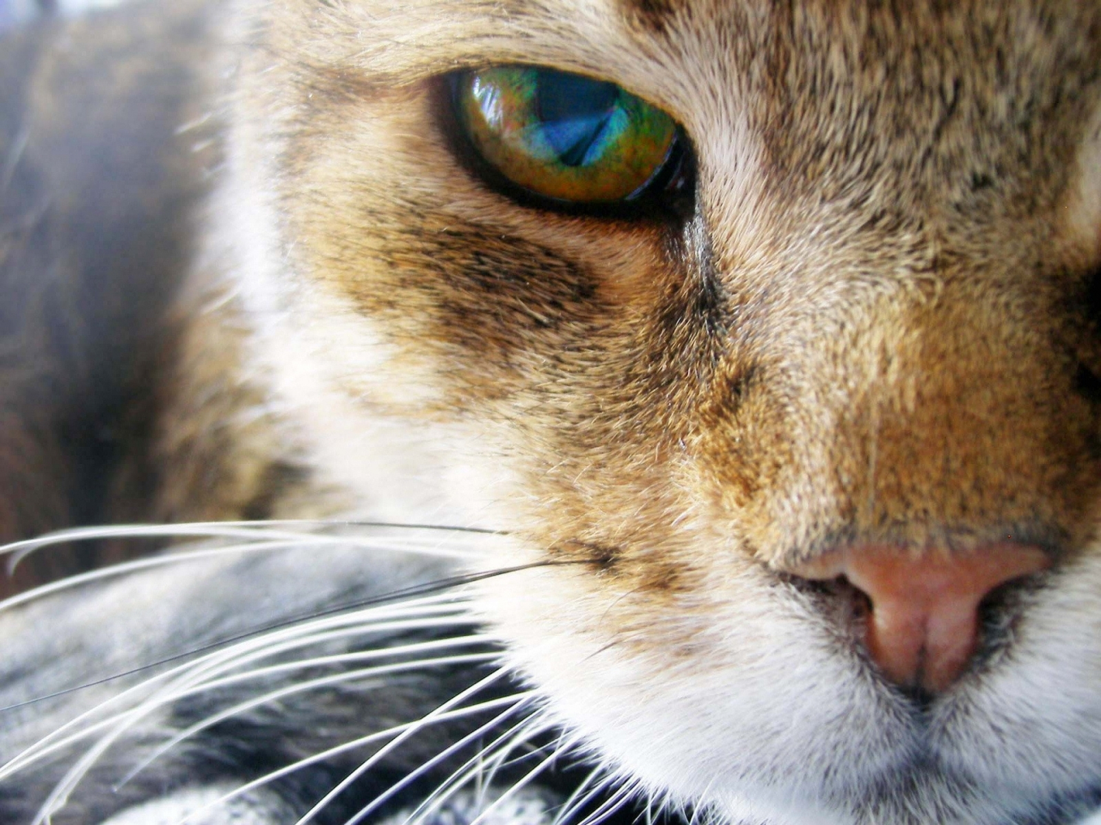 2977 download wallpaper Animals, Cats screensavers and pictures for free