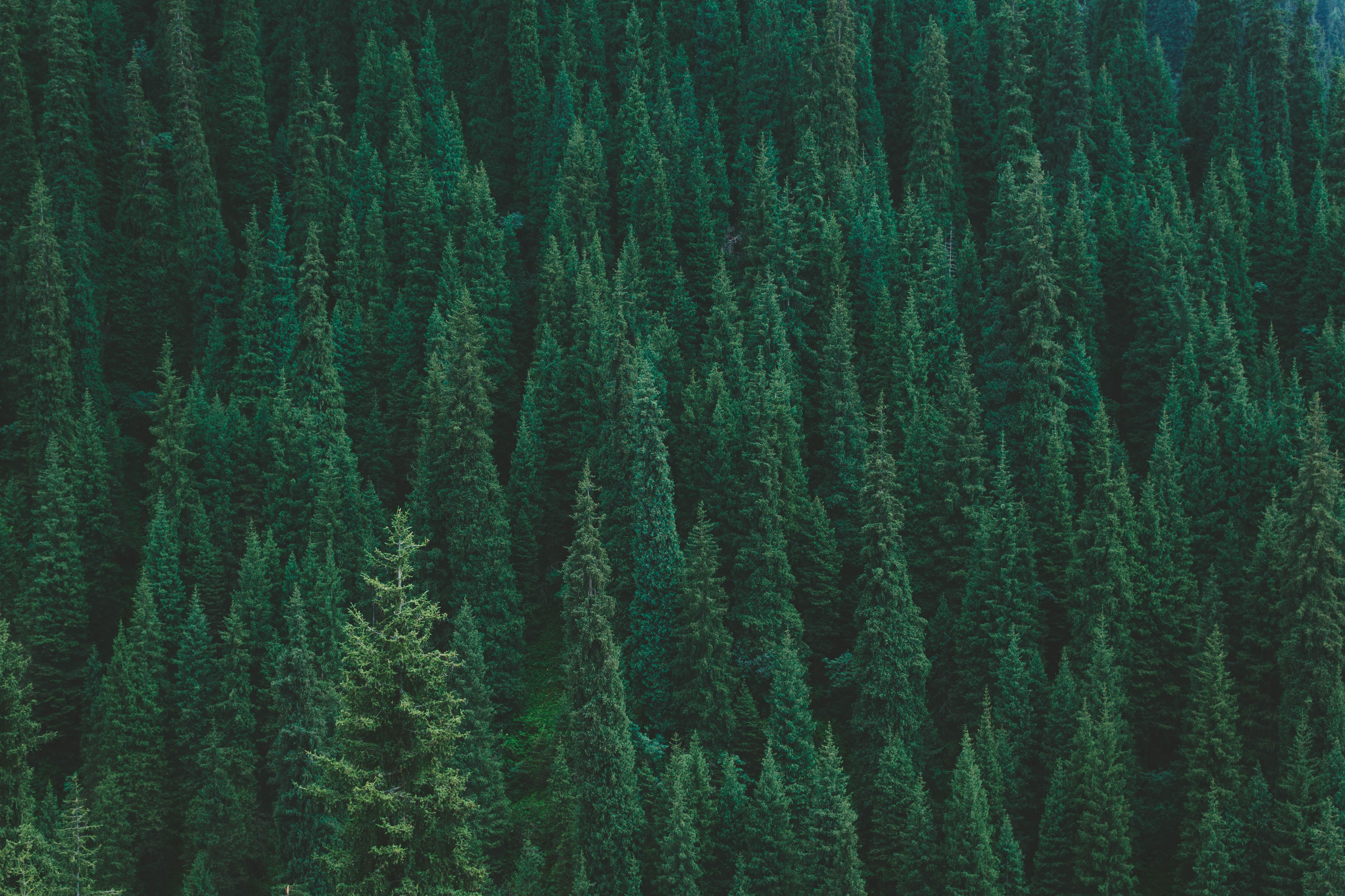 64519 скачать обои Лес, Природа, Деревья, Вид Сверху, Зеленый - заставки и картинки бесплатно