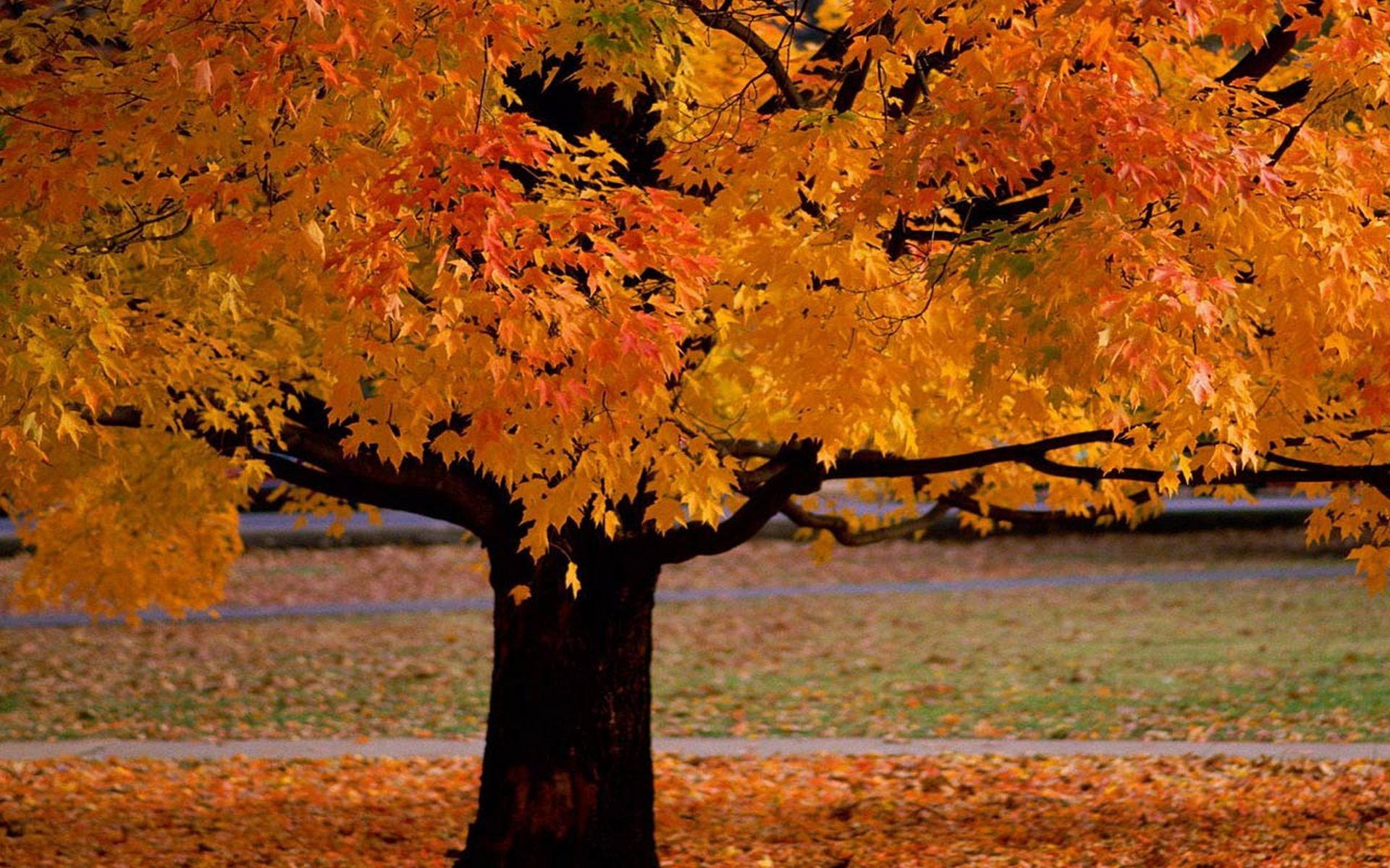 27400 download wallpaper Plants, Landscape, Trees, Autumn screensavers and pictures for free