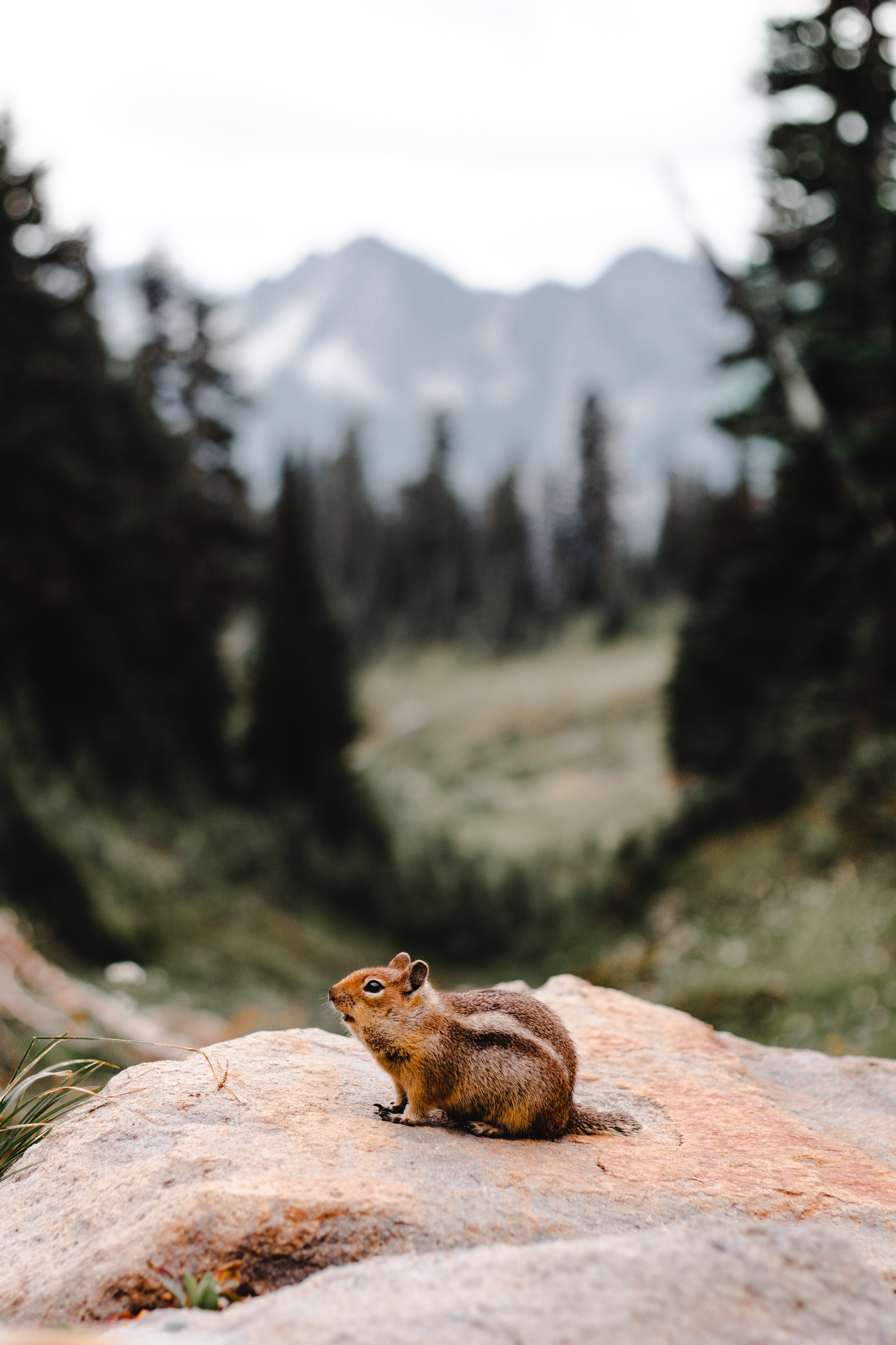 70248 download wallpaper Animals, Chipmunk, Rodent, Fluffy, Rock, Stone screensavers and pictures for free
