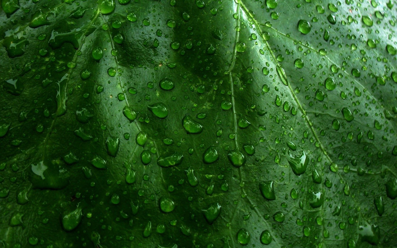 152656 Screensavers and Wallpapers Drops for phone. Download Drops, Grass, Leaves, Macro, Surface, Dew pictures for free