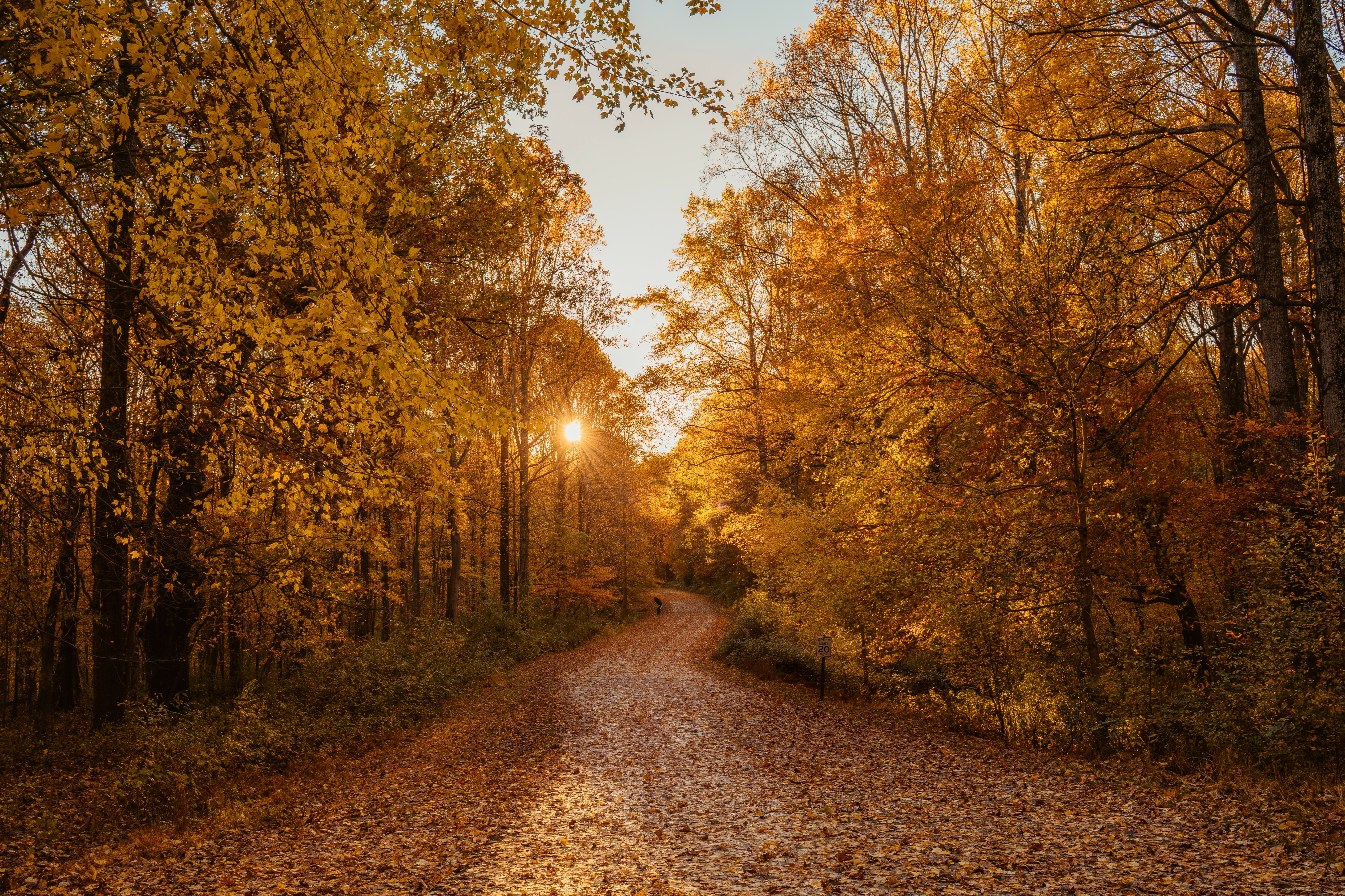 79162 download wallpaper Landscape, Nature, Trees, Autumn, Road, Forest screensavers and pictures for free