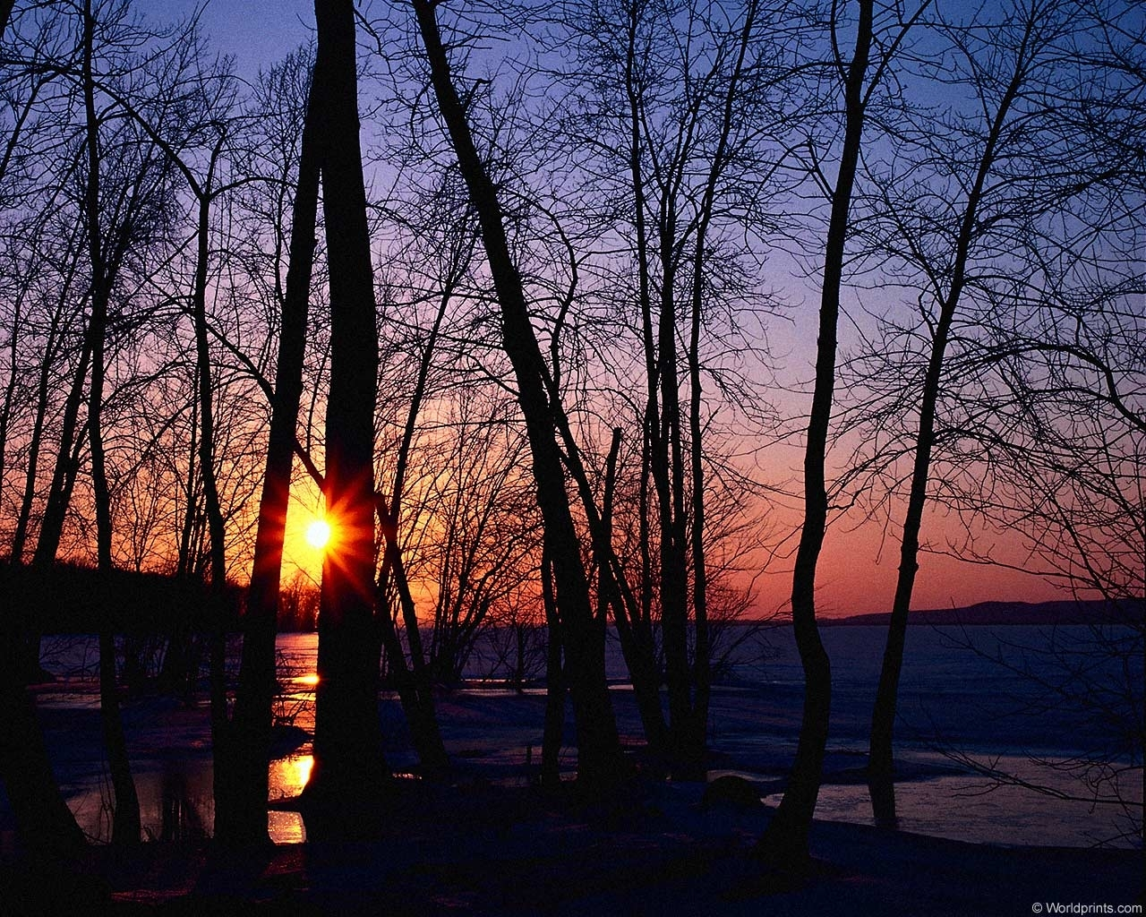 554 download wallpaper Landscape, Trees, Sunset, Sun screensavers and pictures for free