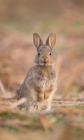 93384 Screensavers and Wallpapers Funny for phone. Download Animals, Hare, Nice, Sweetheart, Funny, Animal, Wildlife pictures for free