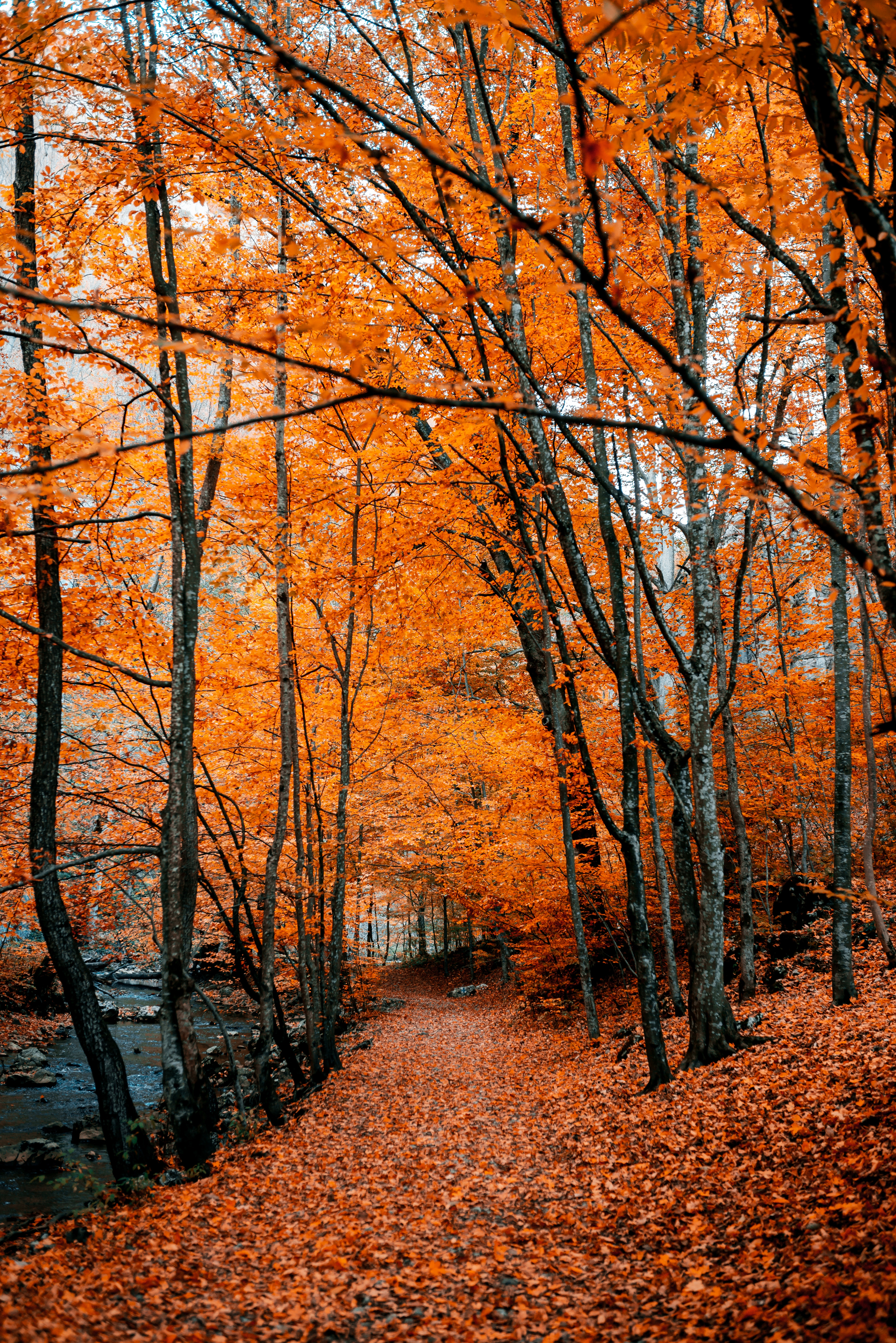 Download free Autumn HD pictures