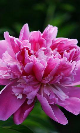 41190 télécharger le fond d'écran Plantes, Fleurs - économiseurs d'écran et images gratuitement