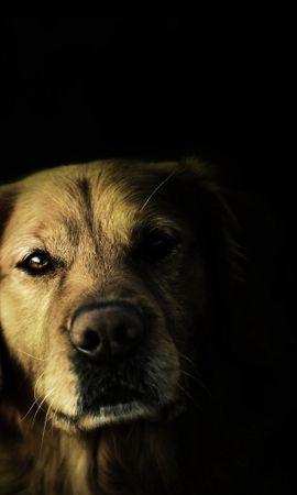 47280 baixar papel de parede Animais, Cães - protetores de tela e imagens gratuitamente