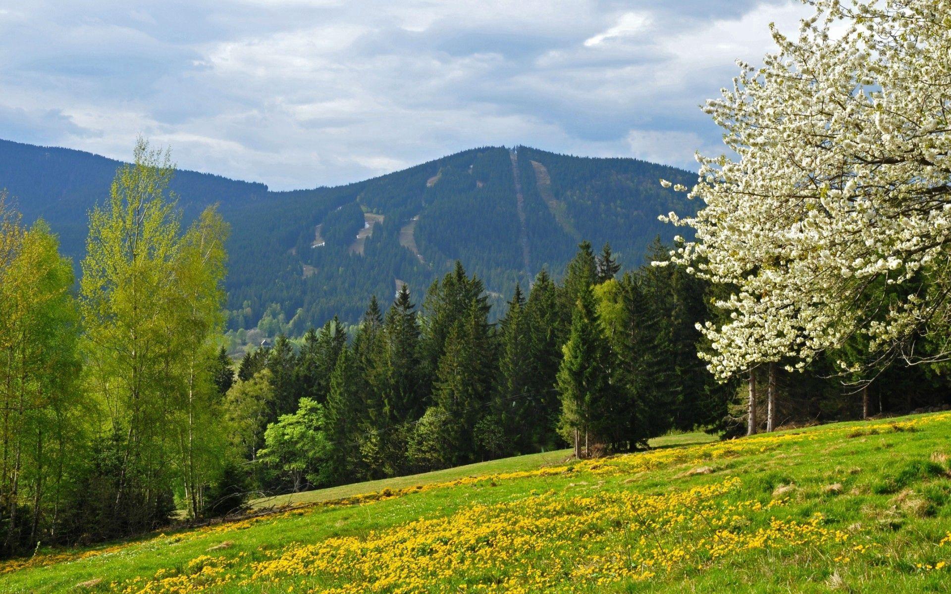 89998 baixar papel de parede Natureza, Grama, Árvores, Campo, Flores - protetores de tela e imagens gratuitamente