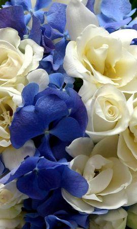 44527 télécharger le fond d'écran Plantes, Fleurs - économiseurs d'écran et images gratuitement