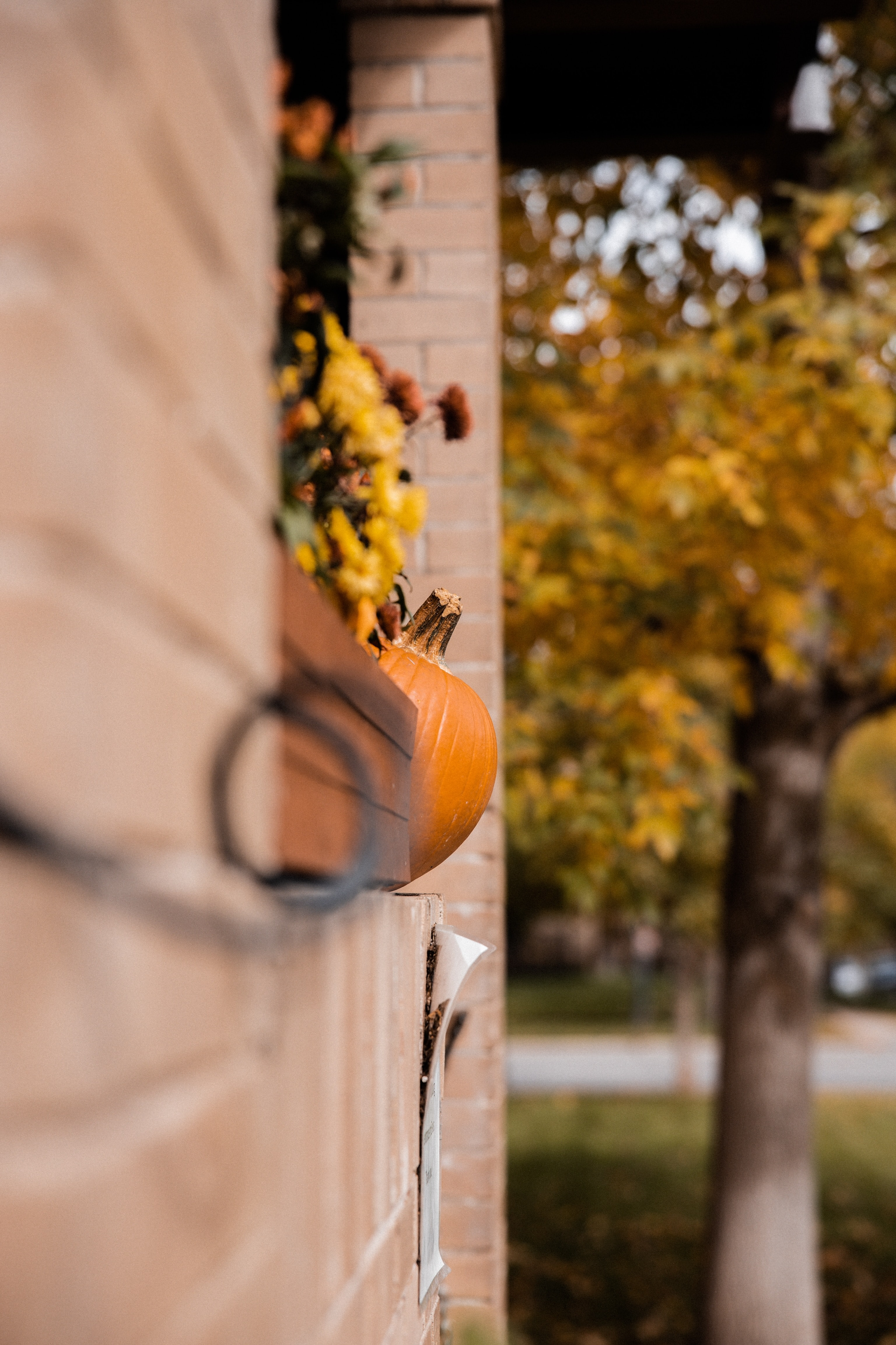 97332 download wallpaper Miscellanea, Miscellaneous, Autumn, Halloween, Building, Pumpkin screensavers and pictures for free