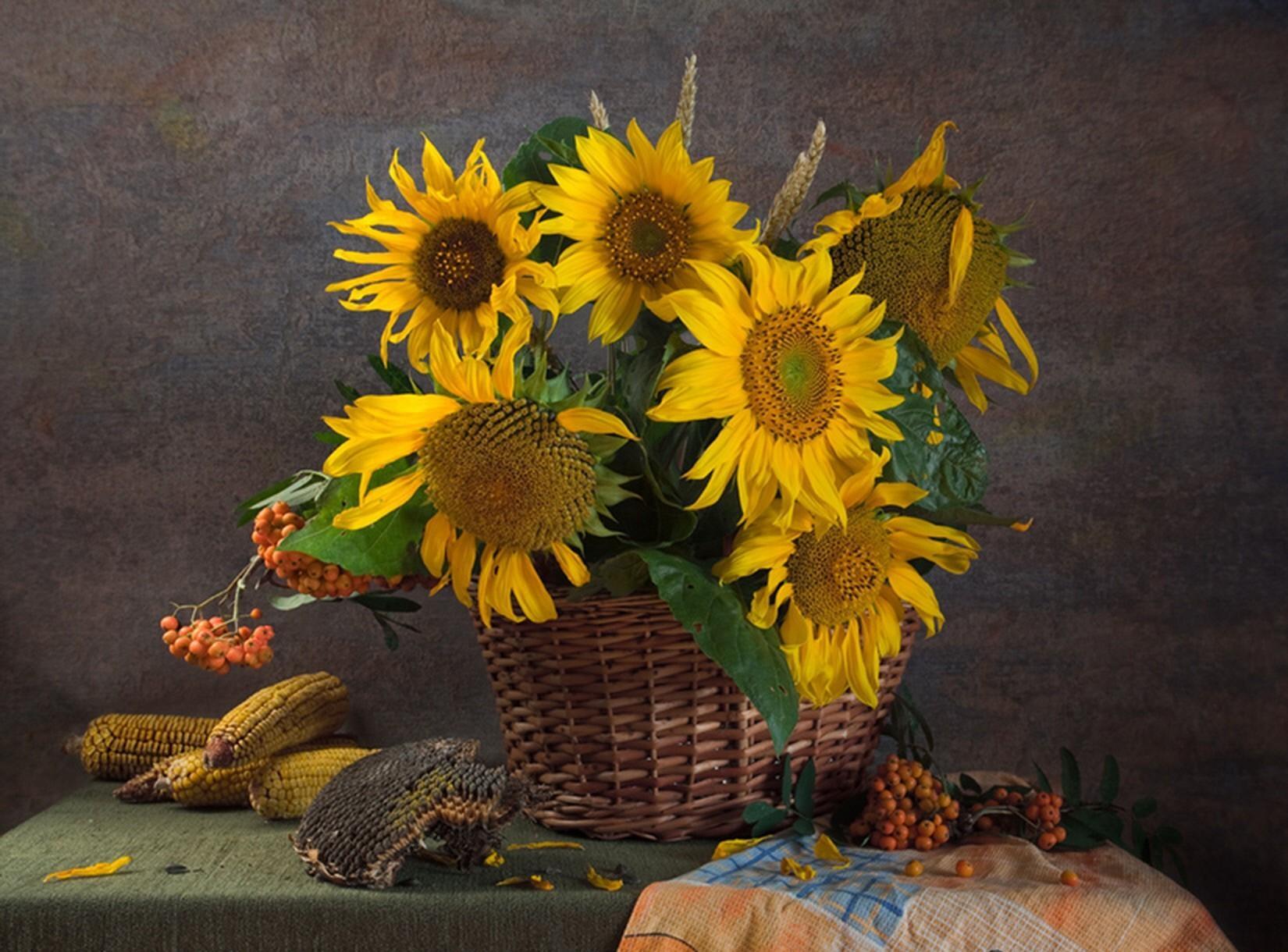 61003 скачать обои Рябина, Подсолнухи, Цветы, Натюрморт, Корзина, Семечки, Кукуруза - заставки и картинки бесплатно