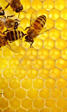 38413 télécharger le fond d'écran Insectes, Abeilles - économiseurs d'écran et images gratuitement