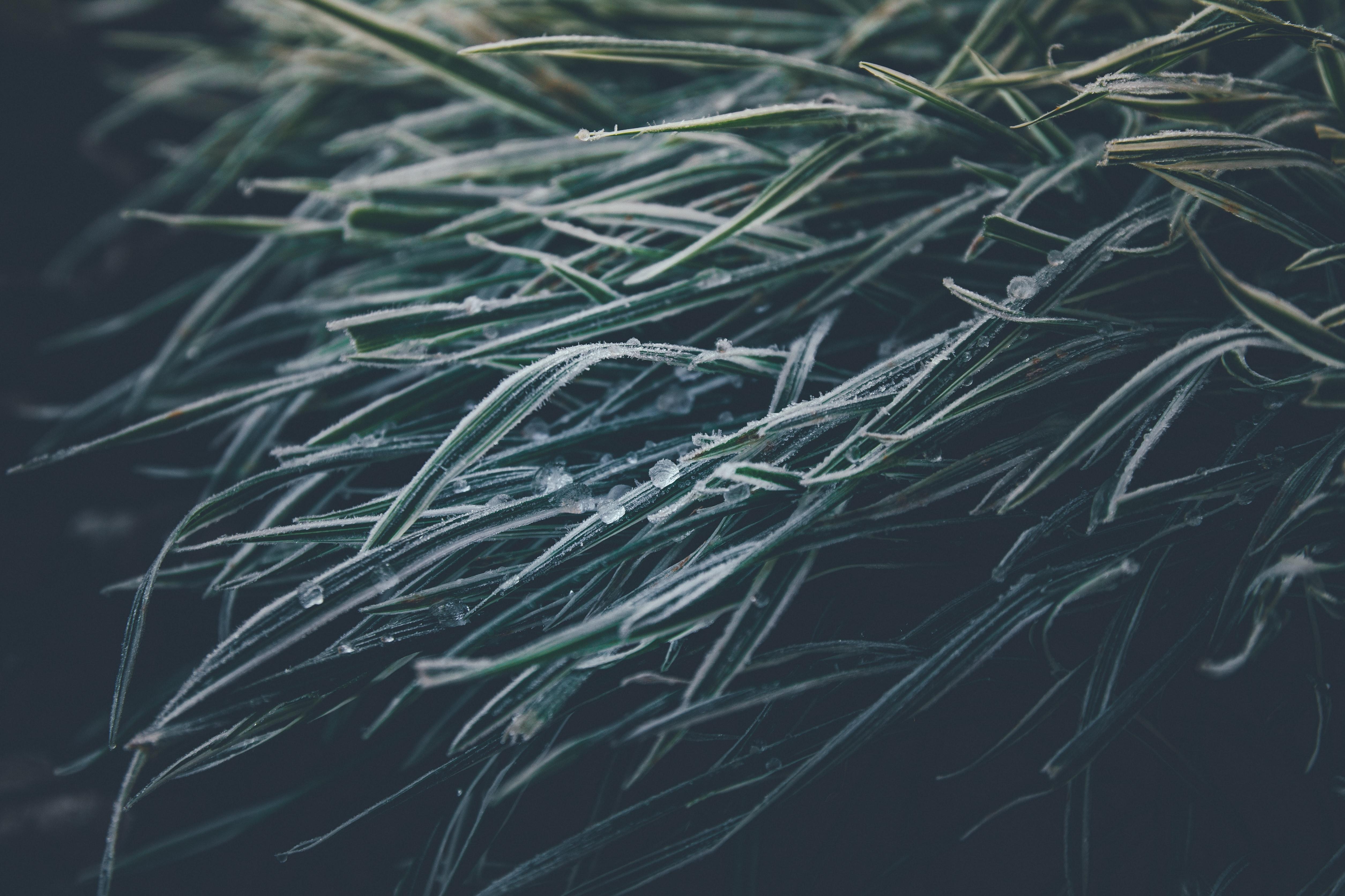 116165 скачать обои Макро, Трава, Лед, Замерзший, Зима - заставки и картинки бесплатно