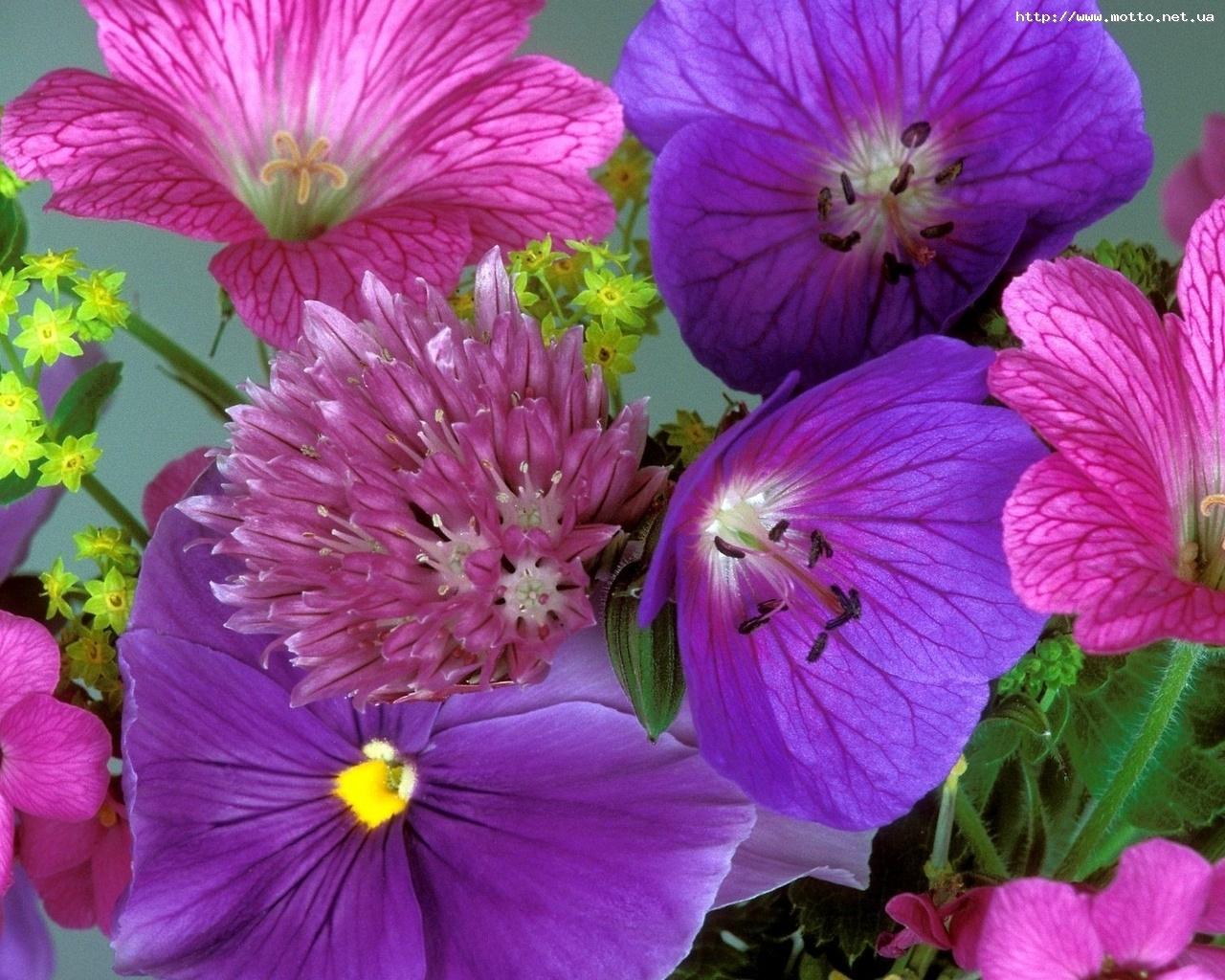 2760 скачать обои Растения, Цветы - заставки и картинки бесплатно