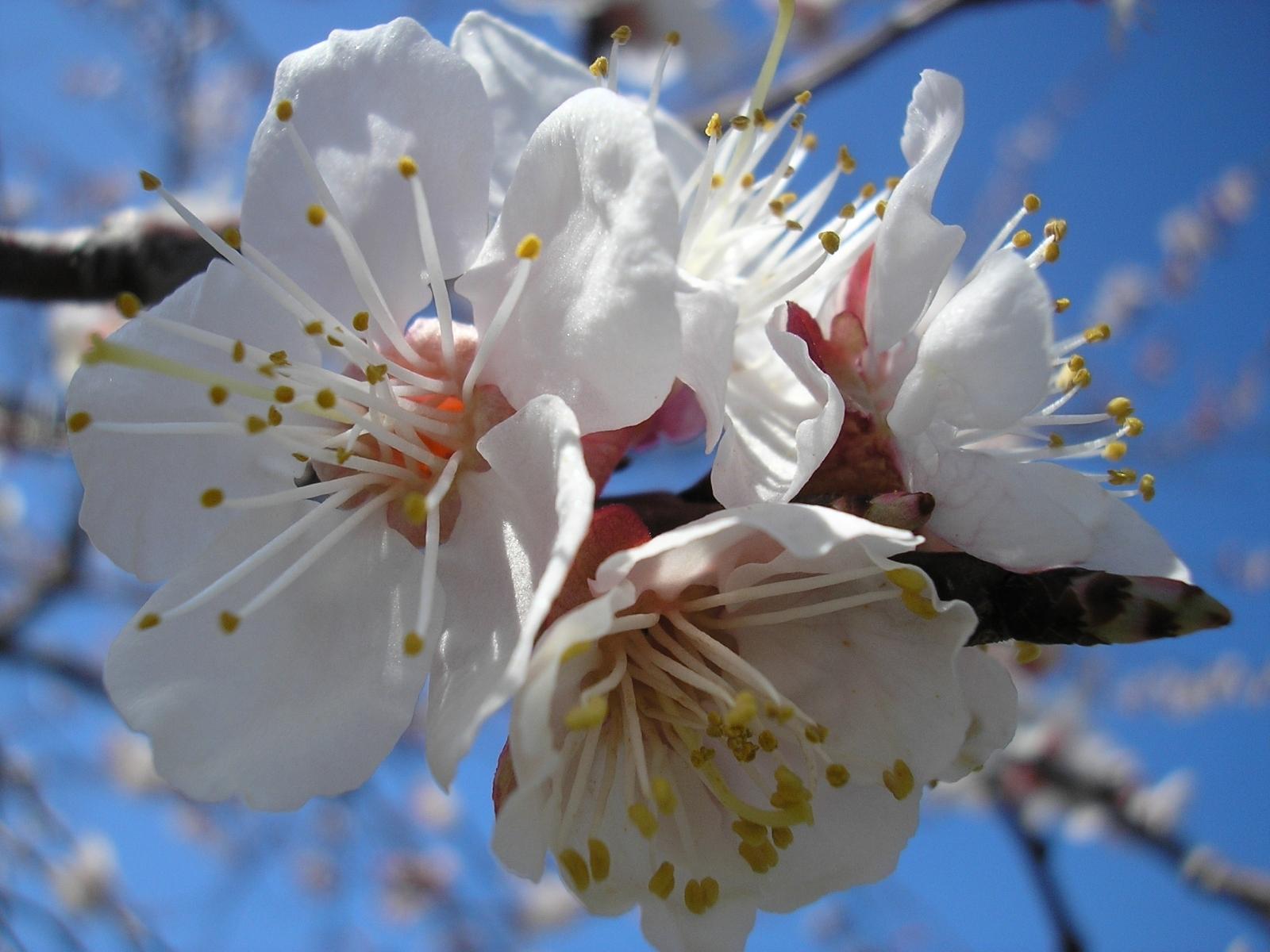 8399 скачать обои Растения, Цветы - заставки и картинки бесплатно