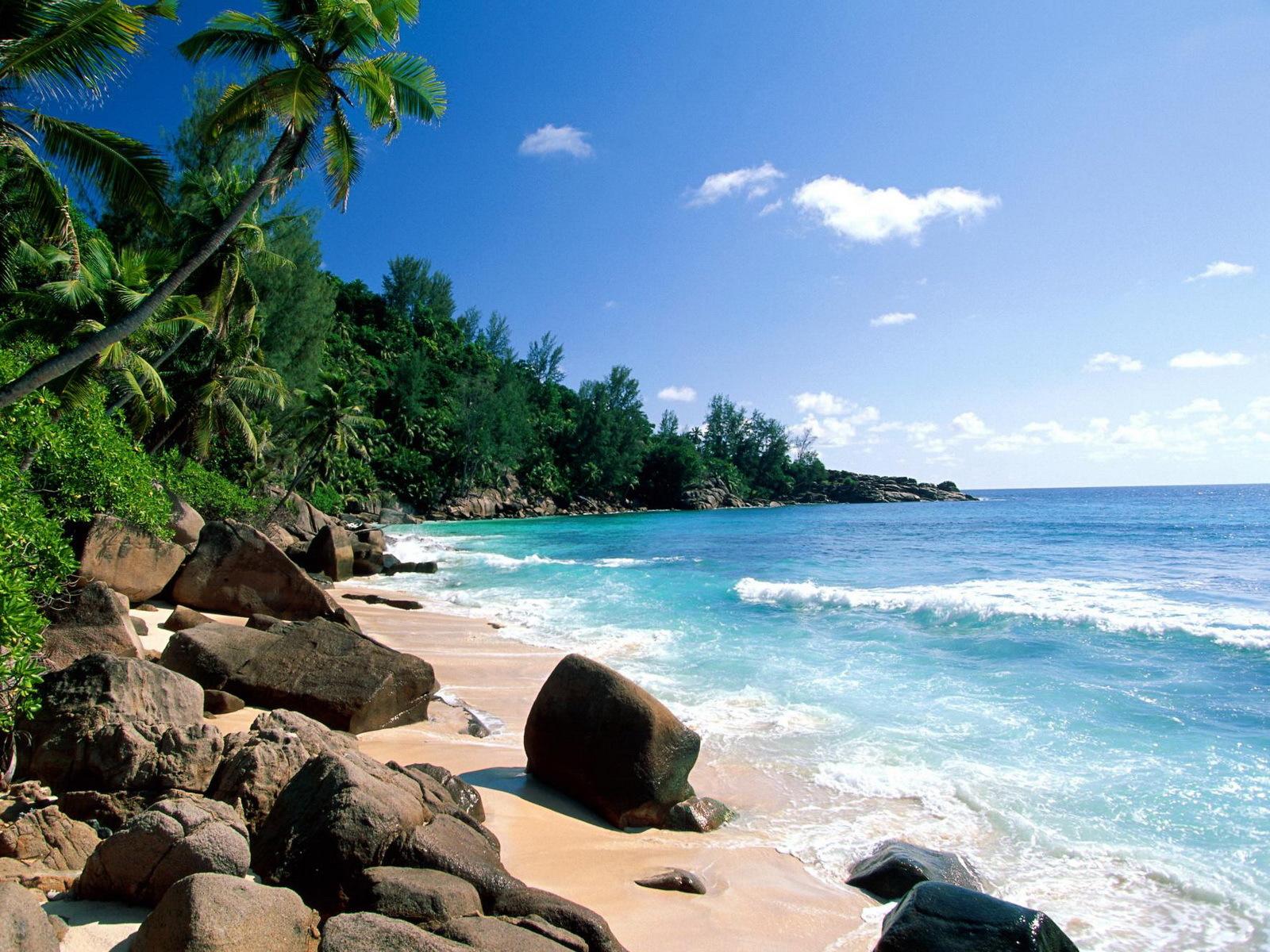 9603 скачать обои Пейзаж, Вода, Море, Пляж, Пальмы - заставки и картинки бесплатно