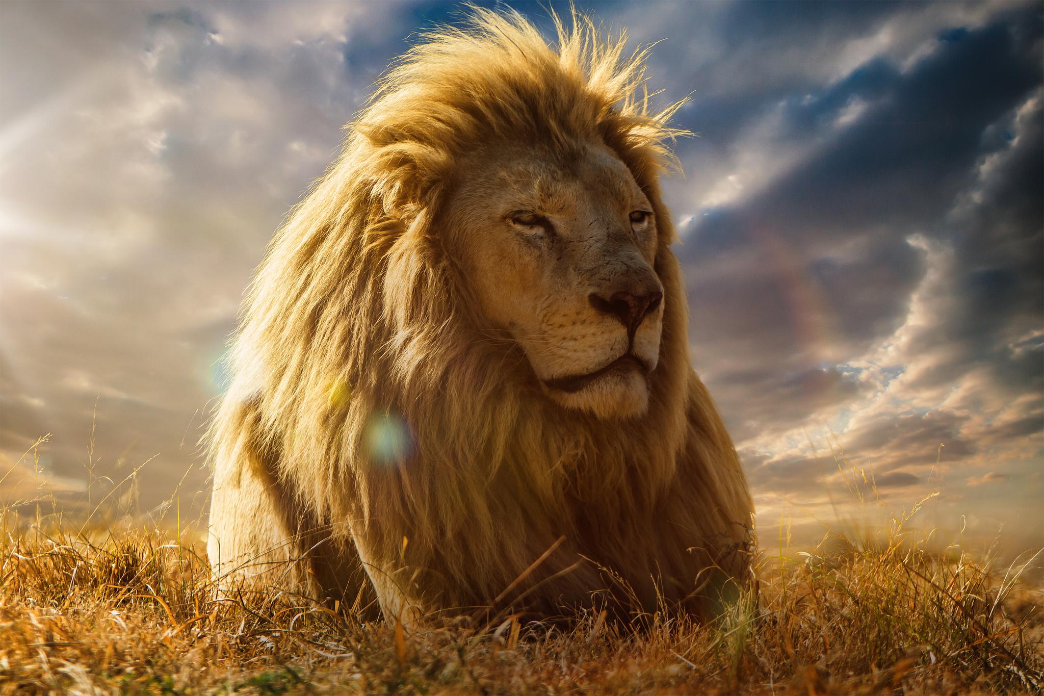 128583 Protetores de tela e papéis de parede Leão em seu telefone. Baixe Leão, Animais, Savana, Um Leão, Juba, Rei Das Feras, Rei Das Bestas fotos gratuitamente