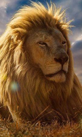 128583 скачать обои Животные, Лев, Царь Зверей, Грива, Саванна - заставки и картинки бесплатно