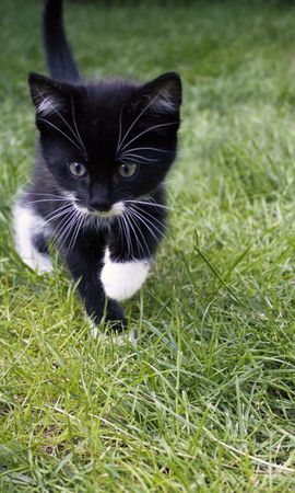 126184 download wallpaper Animals, Kitty, Kitten, Cat, Grass, Stroll, Nice, Sweetheart screensavers and pictures for free