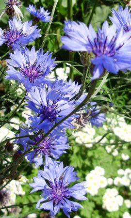 8927 скачать обои Растения, Цветы - заставки и картинки бесплатно