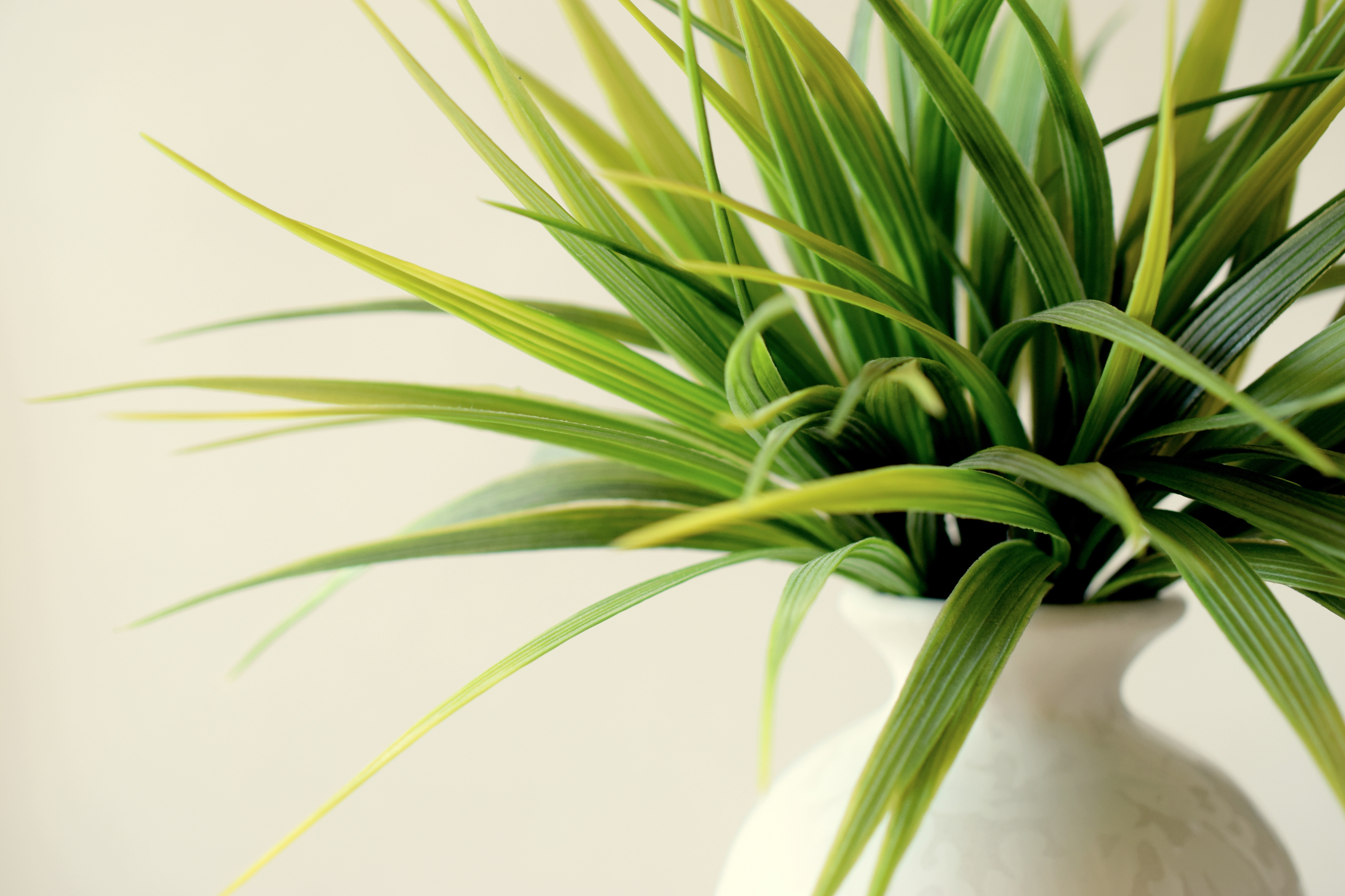 94797 download wallpaper Miscellanea, Miscellaneous, Plant, Vase, Leaves screensavers and pictures for free