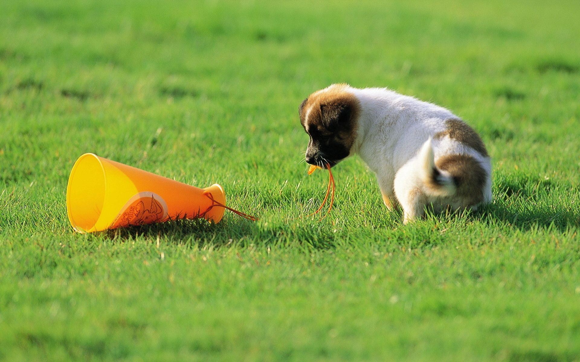 117492 скачать обои Животные, Собака, Щенок, Игрушка, Трава, Любопытство - заставки и картинки бесплатно