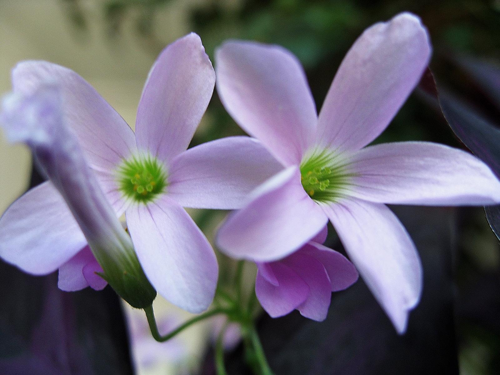 6158 скачать обои Растения, Цветы - заставки и картинки бесплатно