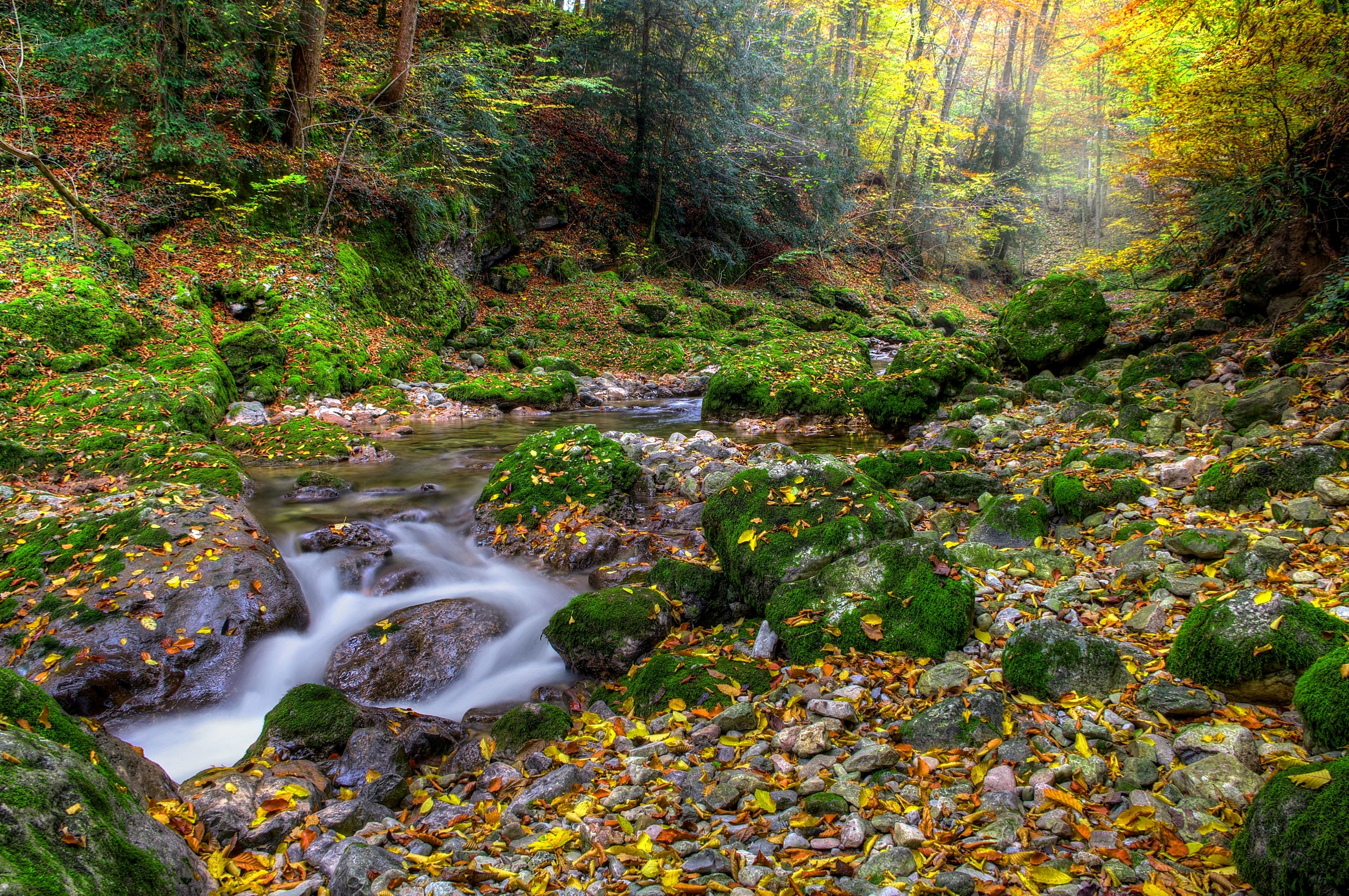 95932 télécharger le fond d'écran Nature, Automne, Forêt, Fleuve, Noyaux, Paysage - économiseurs d'écran et images gratuitement