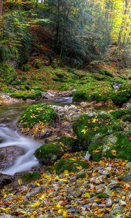 95932 скачать обои Природа, Осень, Лес, Речка, Камни, Пейзаж - заставки и картинки бесплатно