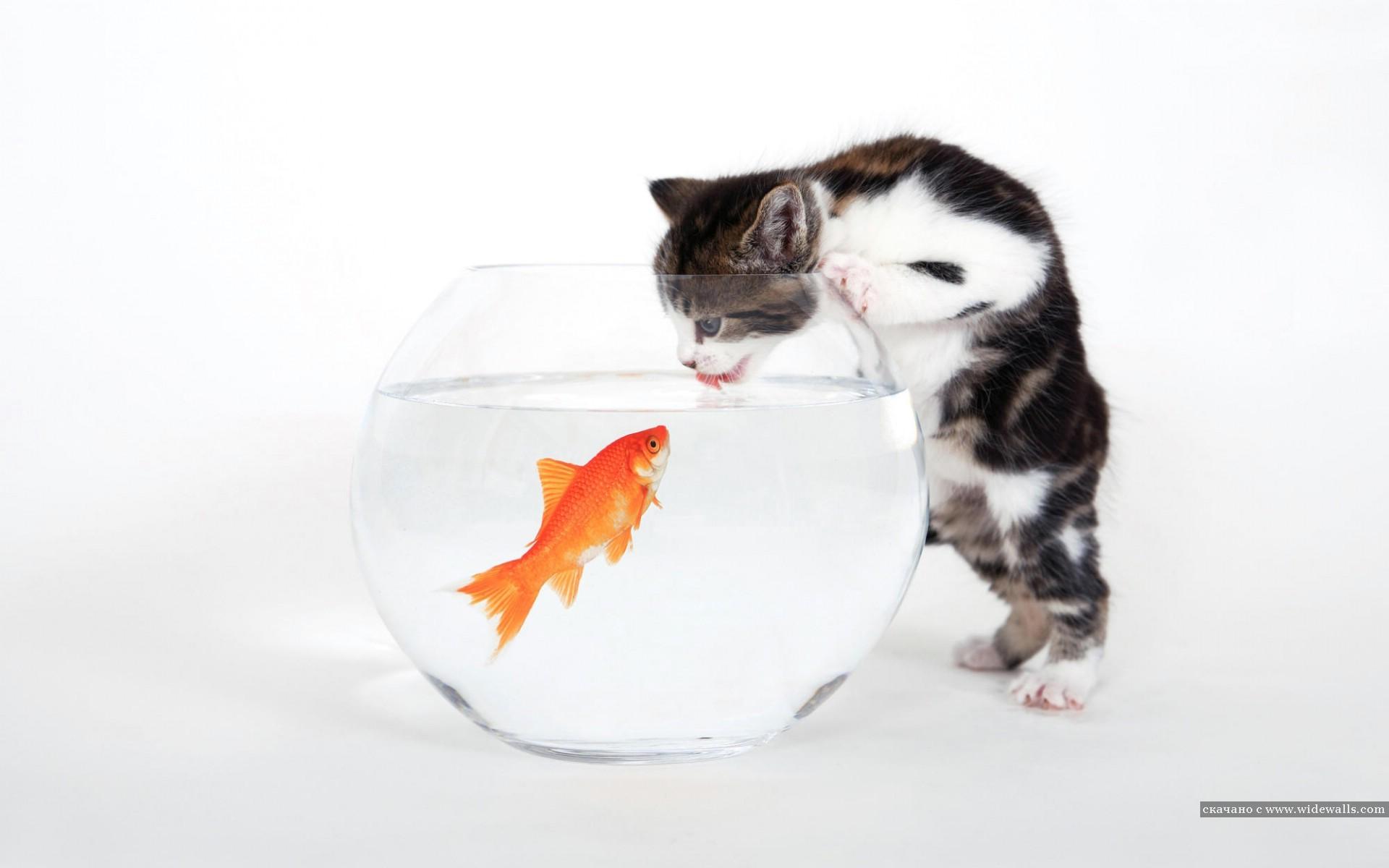12451 завантажити шпалери Кішки, Гумор, Тварини, Риби - заставки і картинки безкоштовно