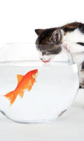 12451 download wallpaper Funny, Animals, Cats, Fishes screensavers and pictures for free