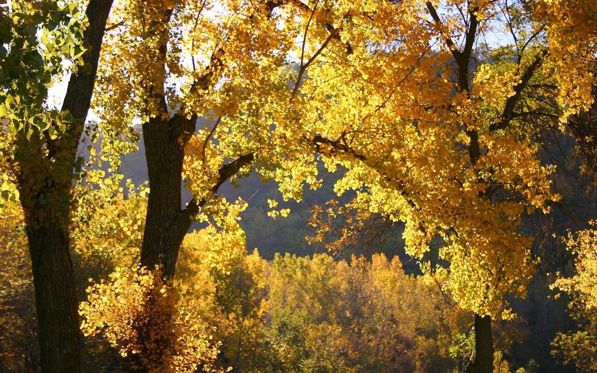 11044 скачать обои Пейзаж, Деревья, Осень - заставки и картинки бесплатно