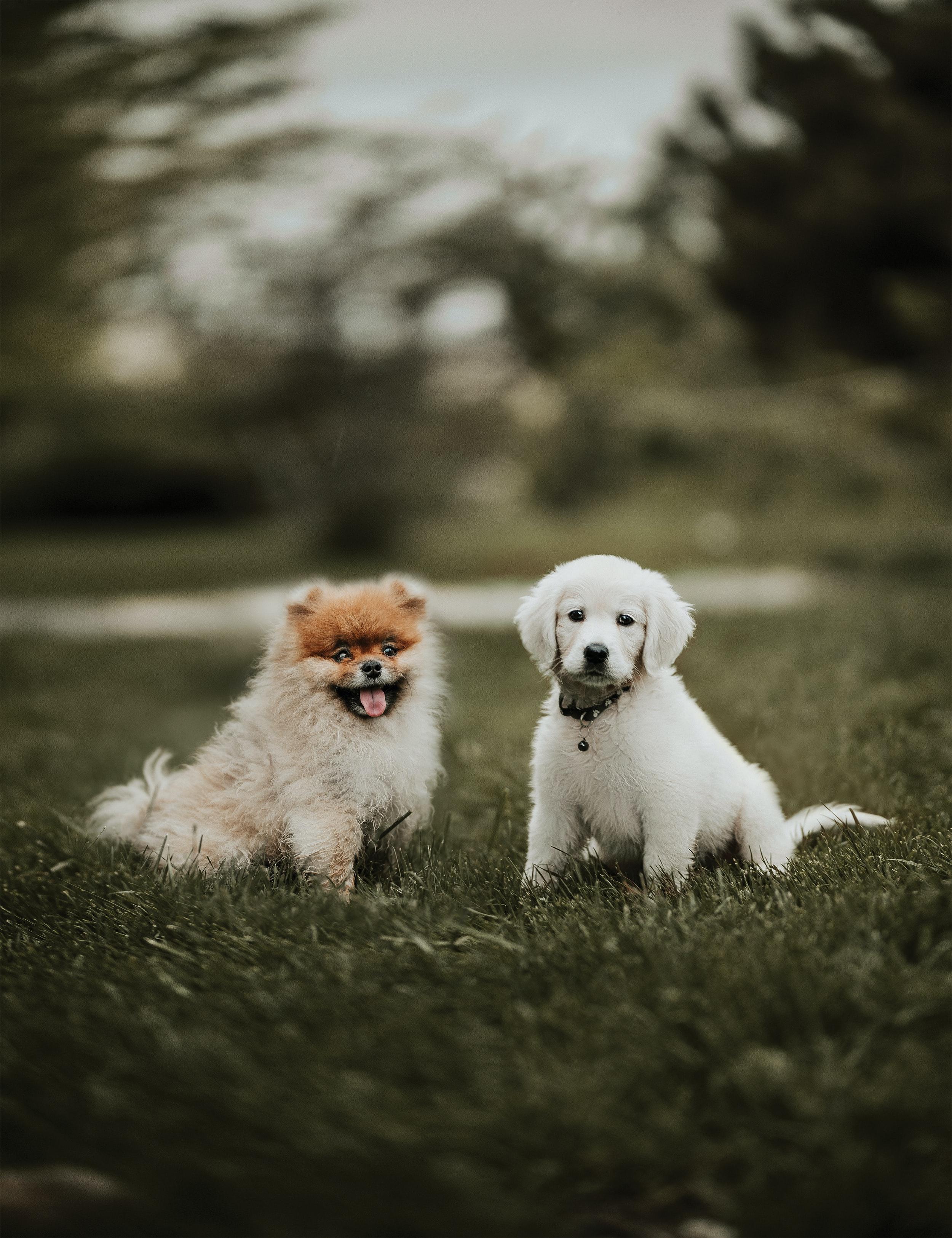 96730 descargar fondo de pantalla Animales, Cachorros, Perros, Amistad: protectores de pantalla e imágenes gratis